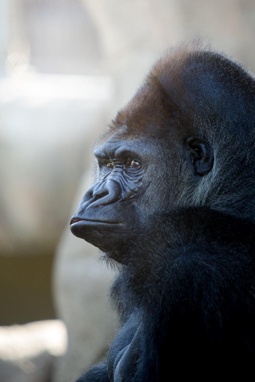 StLouis-Zoo-TB-042816-164.jpg