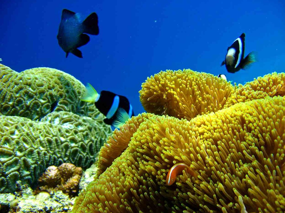 Gili-Trawangan-Lombok-Activities-Activity-Scuba-Scubadive-Scubadiving-Dive-Diving-65.jpg