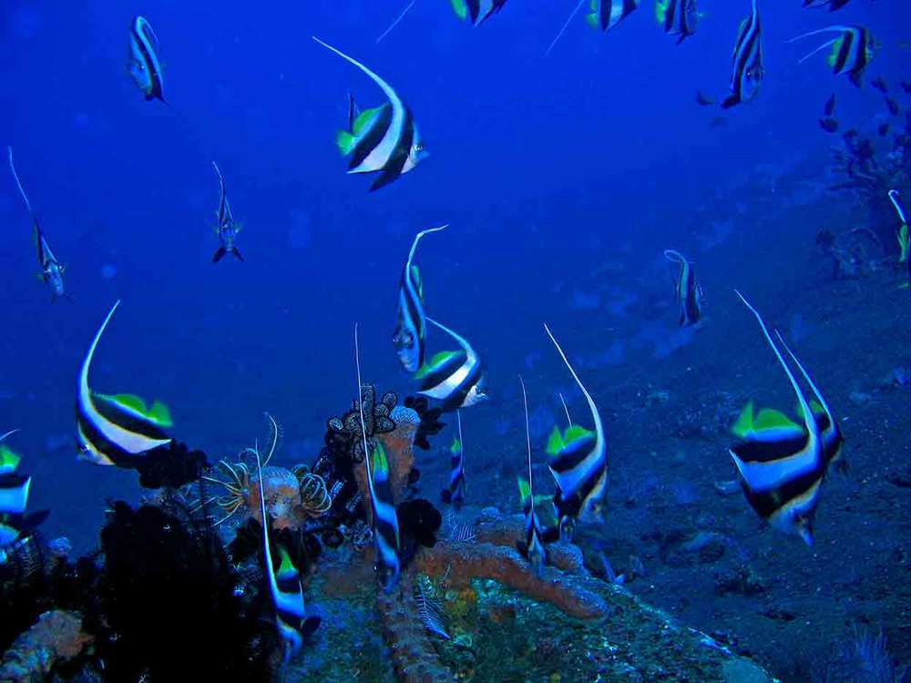 Gili-Trawangan-Lombok-Activities-Activity-Scuba-Scubadive-Scubadiving-Dive-Diving-87.jpg