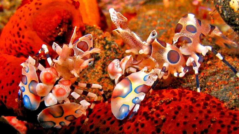 Gili-Trawangan-Lombok-Activities-Activity-Scuba-Scubadive-Scubadiving-Dive-Diving-07.jpg
