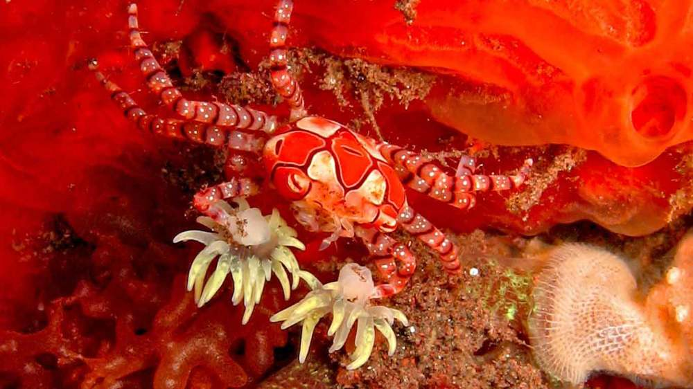 Gili-Trawangan-Lombok-Activities-Activity-Scuba-Scubadive-Scubadiving-Dive-Diving-09.jpg