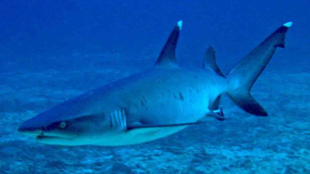 Gili-Trawangan-Lombok-Activities-Activity-Scuba-Scubadive-Scubadiving-Dive-Diving-12.jpg