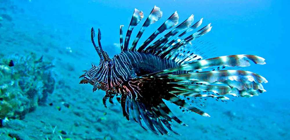 Gili-Trawangan-Lombok-Activities-Snorkeling-Swimming-Swim-Ocean-03.jpg
