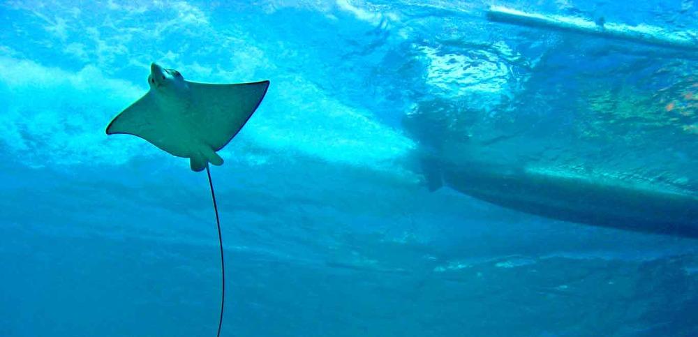 Gili-Trawangan-Lombok-Activities-Snorkeling-Swimming-Swim-Ocean-05.jpg