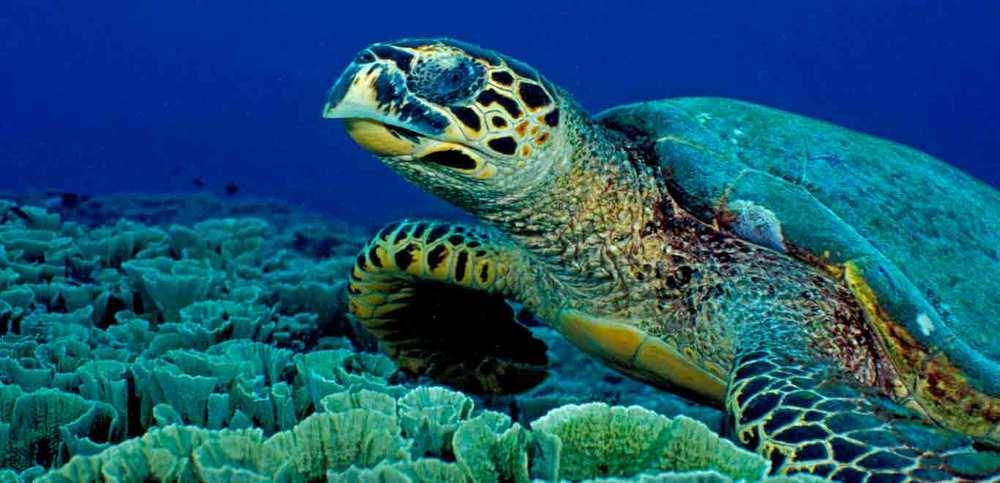 Gili-Trawangan-Lombok-Activities-Snorkeling-Swimming-Swim-Ocean-07.jpg