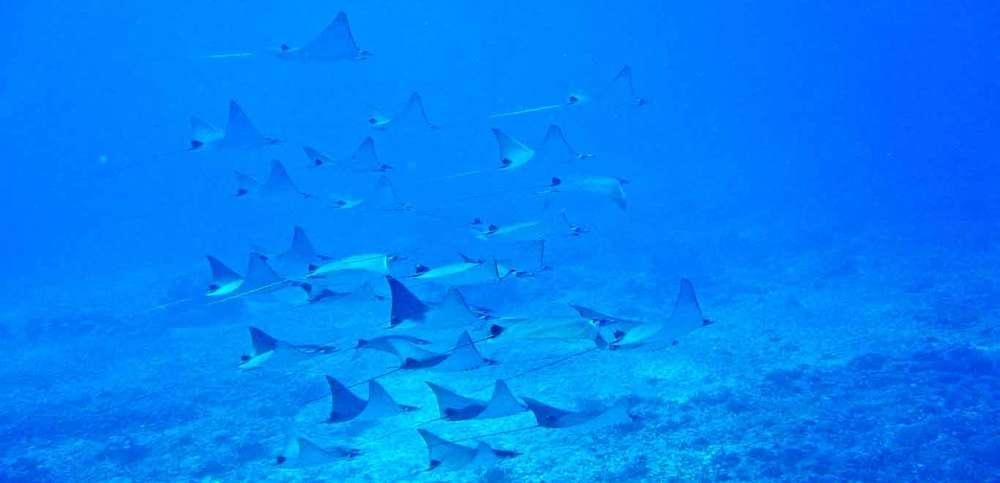Gili-Trawangan-Lombok-Activities-Snorkeling-Swimming-Swim-Ocean-02.jpg
