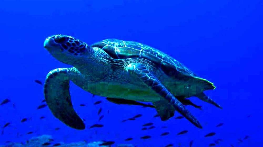 Gili-Trawangan-Lombok-Activities-Activity-Scuba-Scubadive-Scubadiving-Dive-Diving-02.jpg