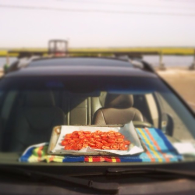 ☀️Protip: If you bring a tray of homegrown tomatoes with you to the beach and leave them in a sunny car for 9 hours, you'll leave with delicious sun-dried ones🍅