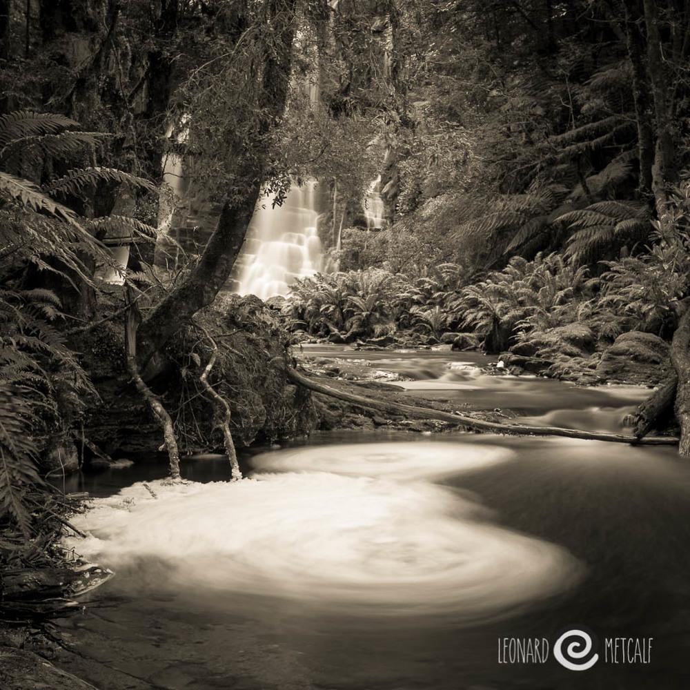 Tarkine, Tasmania @ Leonard Metcalf 2014