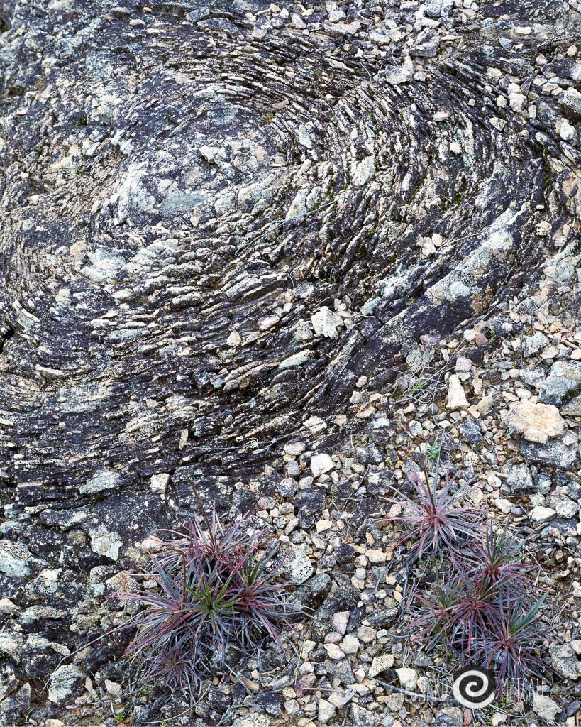 Swirls, Blackheath
