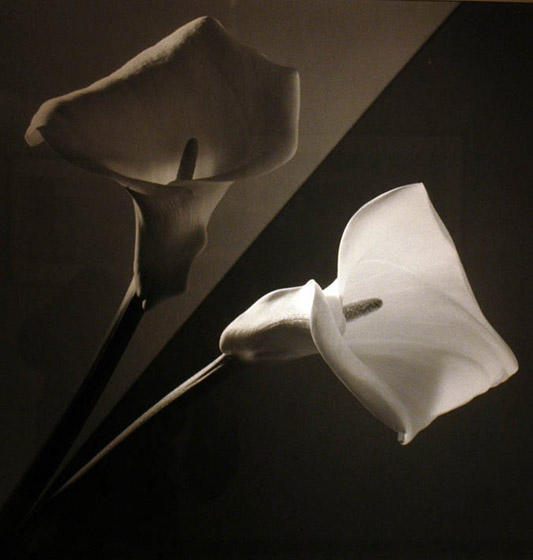robertMapplethorpe.jpg