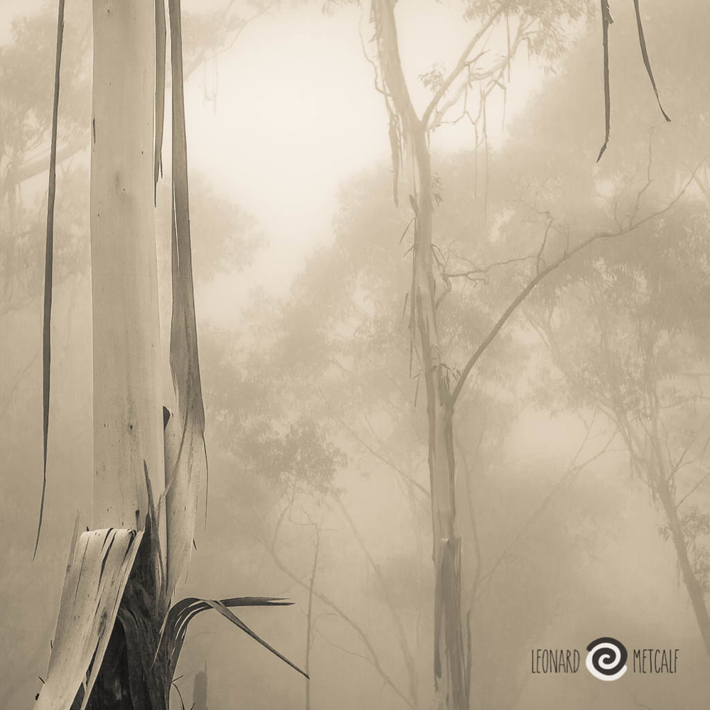 Ghost Gums, The Blue Mountains