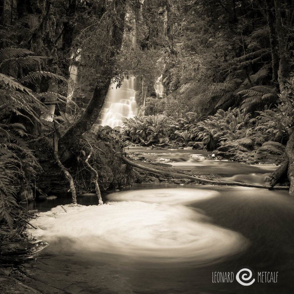 Authur River Region, Tarkine, Tasmania