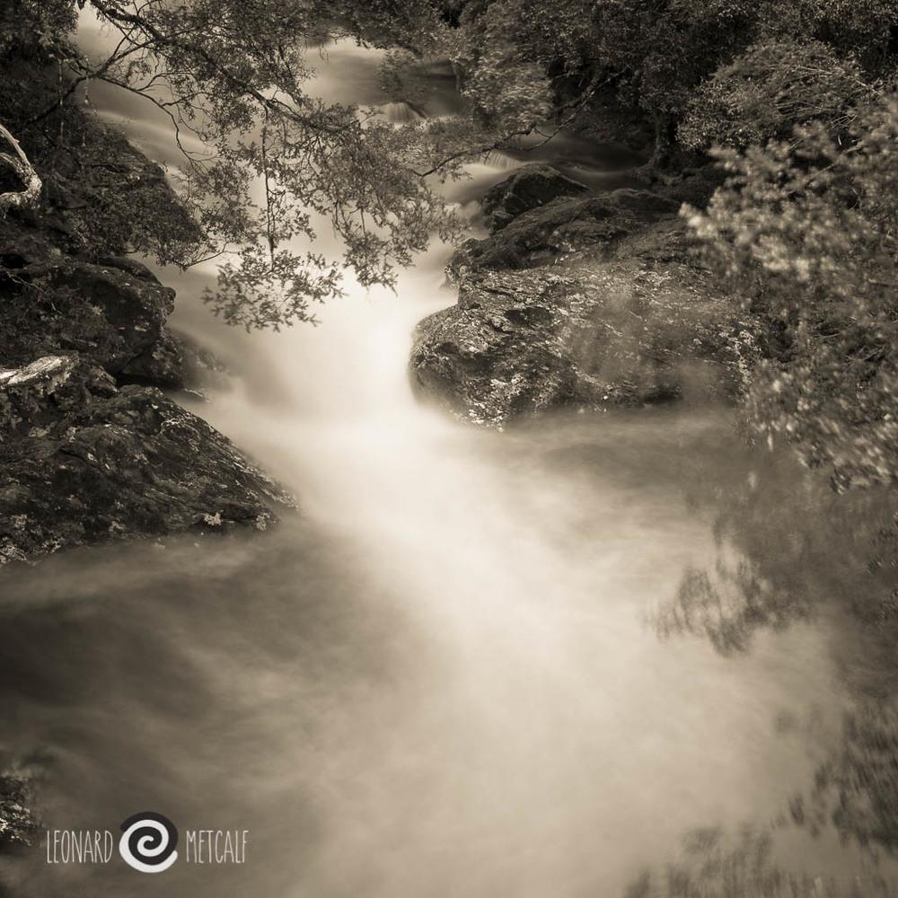 Enchanted forest, Cradle Mountain, Tasmania © Leonard Metcalf 2014