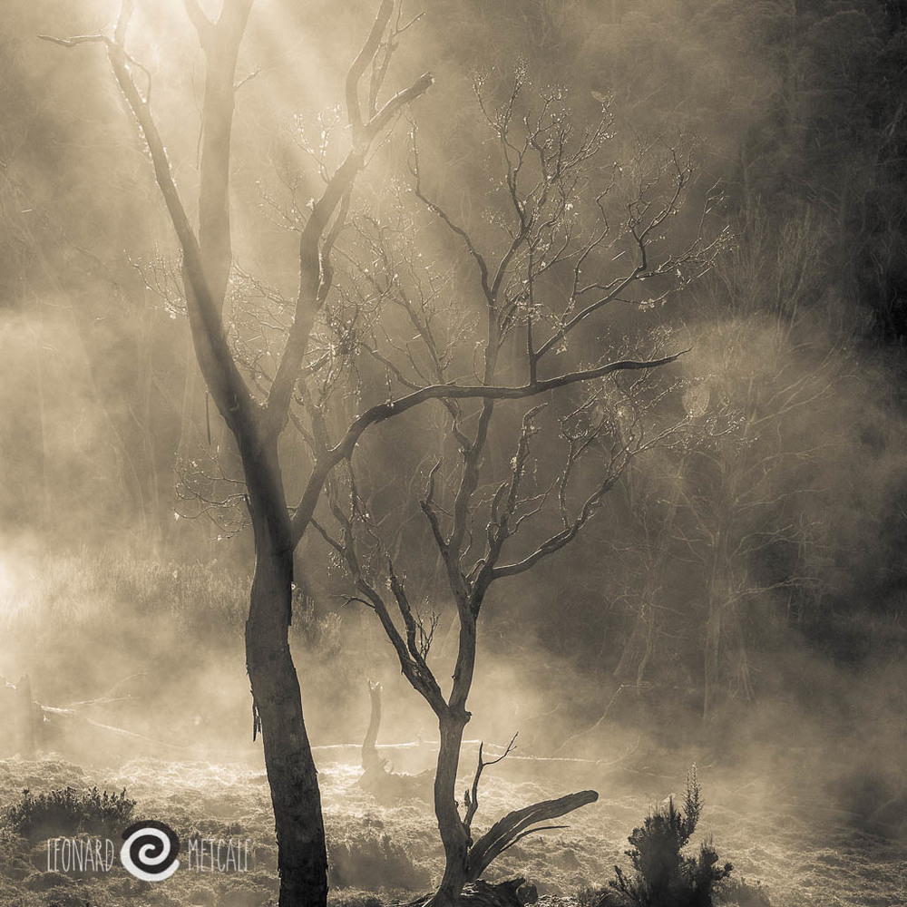 Mist burning off at Cradle Mountain Olympus 45 mm f 1.8 © Leonard Metcalf 2015 - The spiders webs in this shot print out beautifully crisp.