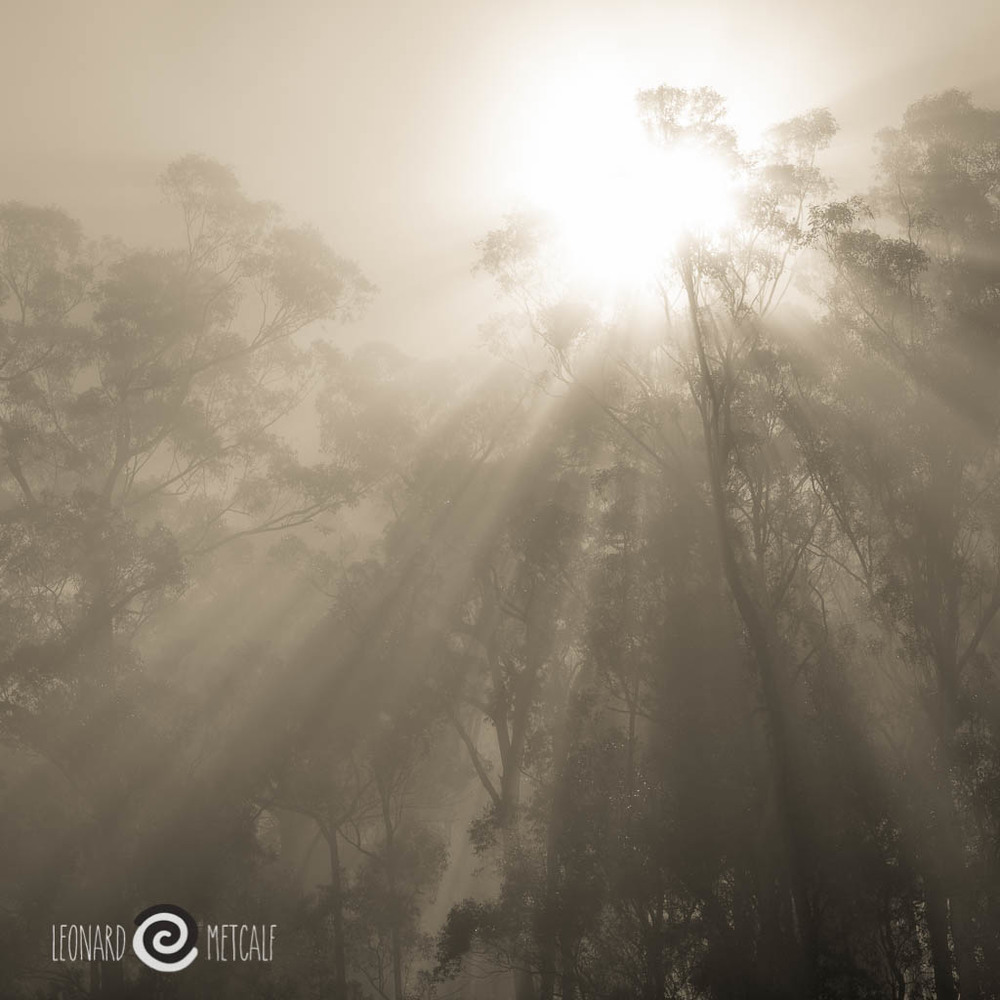 The mid morning sun breaks through the morning mist with dazzling brilliance. Kangaroo Valley, © Len Metcalf