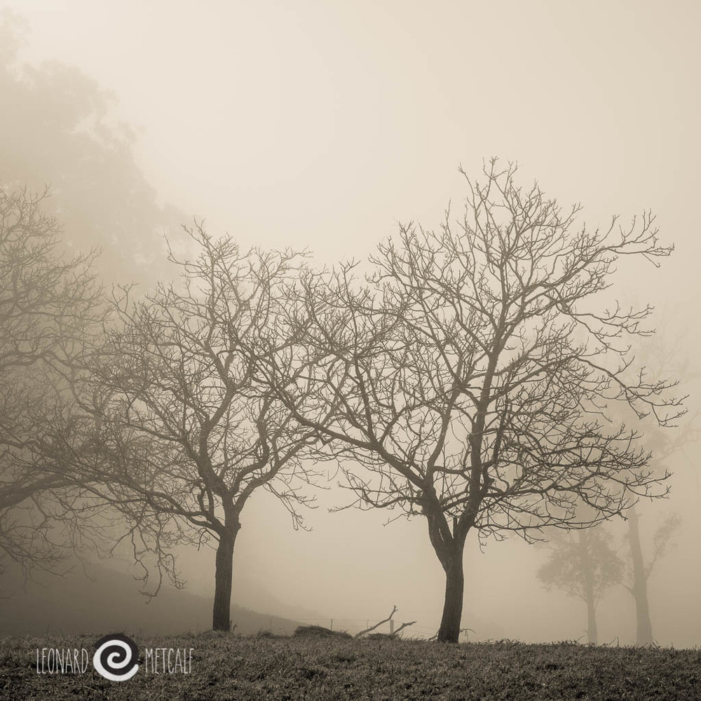 Morning mist, Kangaroo Valley, Photograph copyright © Len Metcalf