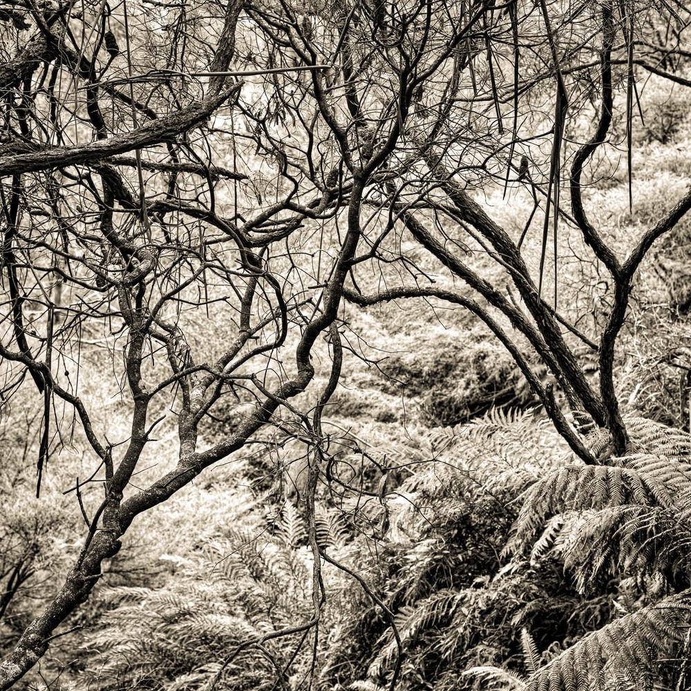 Leura Cascades, PhotographCopyright © Len Metcalf 2016