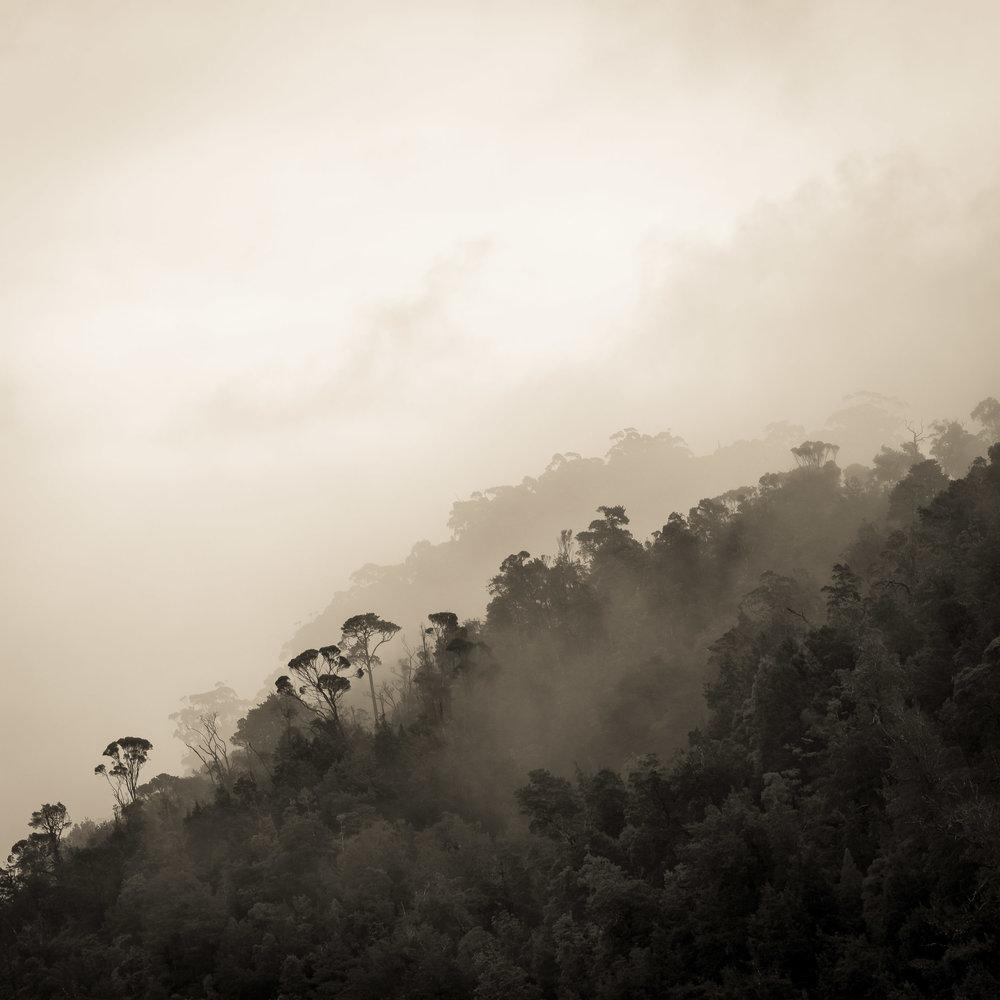Mist on the Pieman River