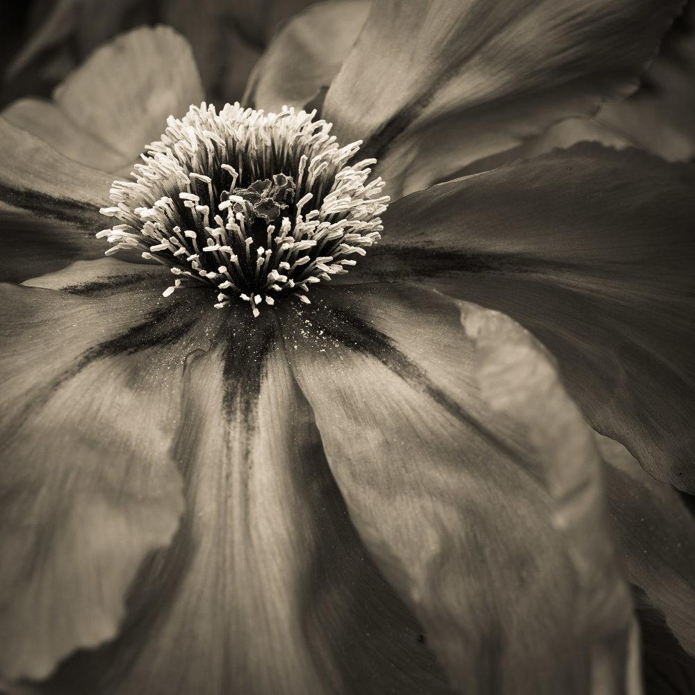 Flower, photograph copyright © Len Metcalf 2019