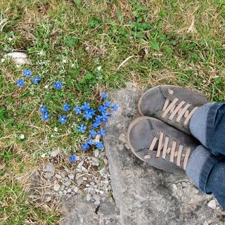 flores-azules.jpg