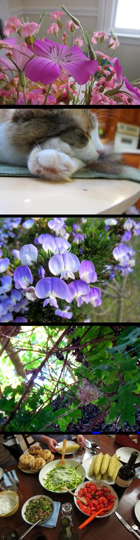 spring_california_d_toledano.png