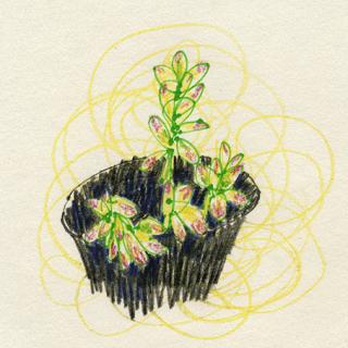 plants017.png