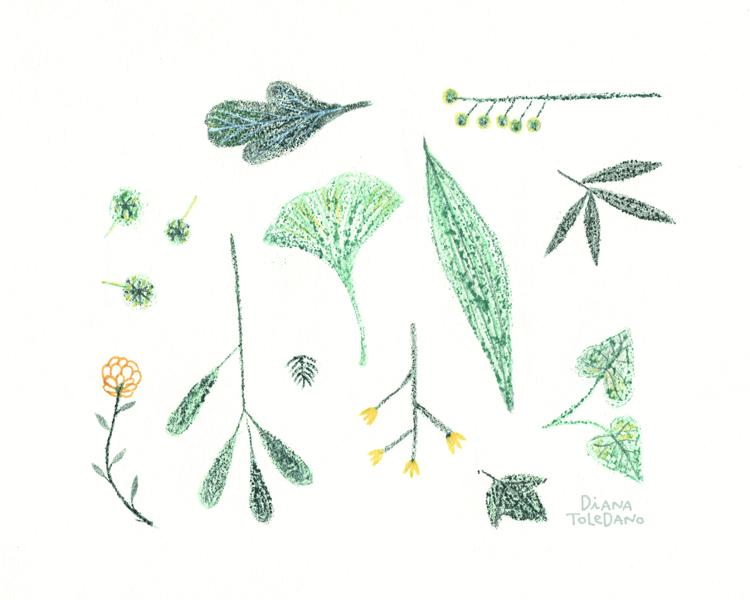 tiny-delicate-plants_diana-toledano.png