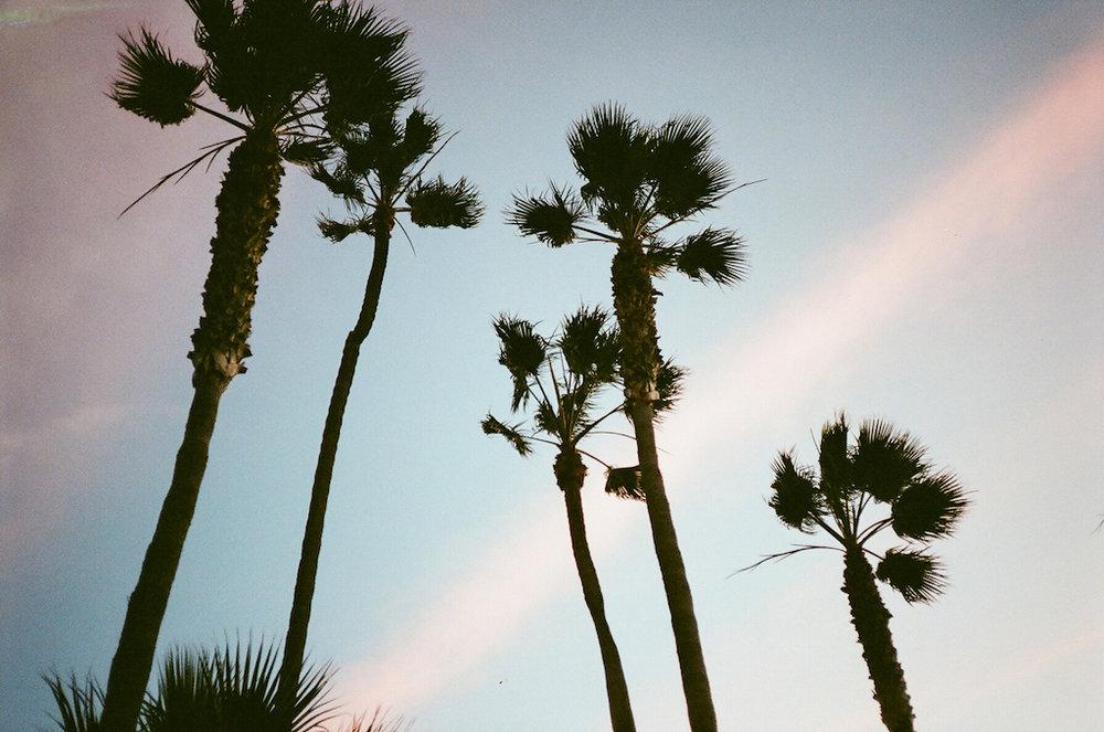 Palms (35mm)
