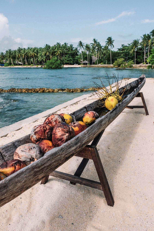 coconuts_guyam_01_web.jpg