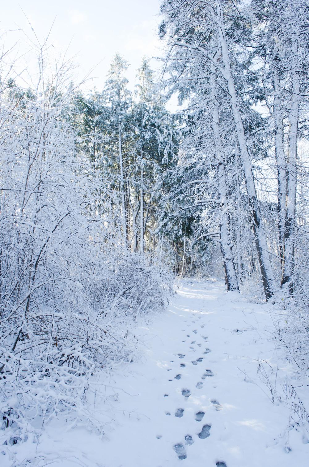 Winter Wonder Land_DSC0100.jpg