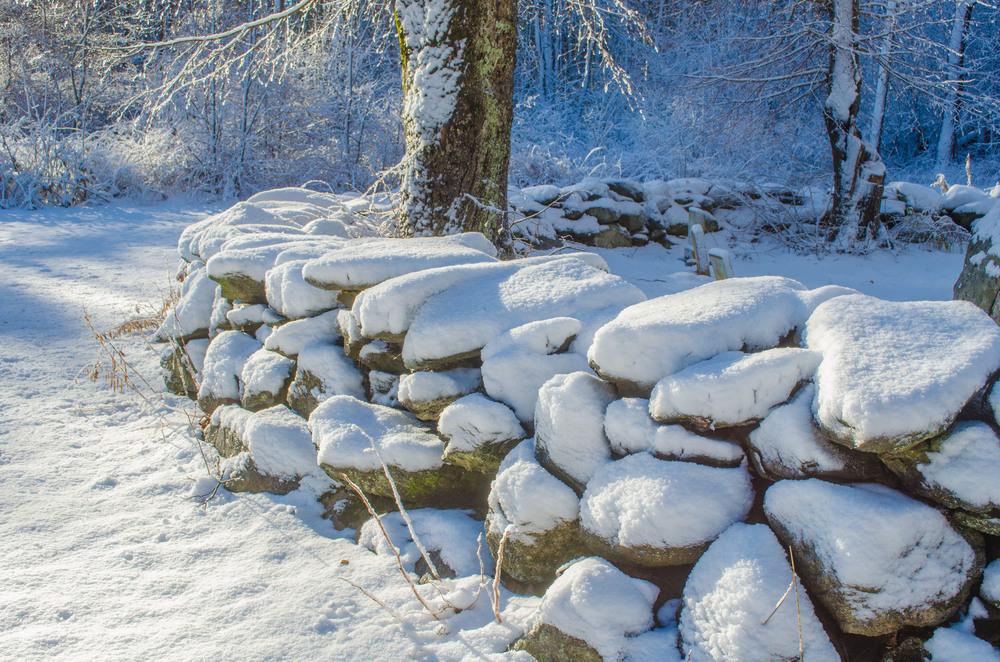Winter Wonder Land_DSC0066.jpg