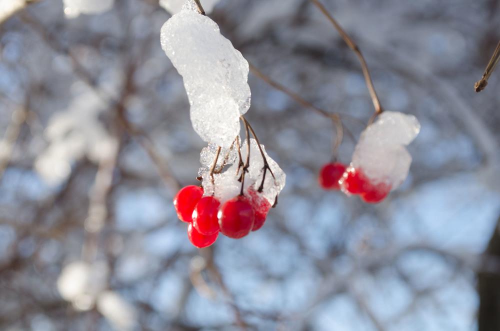 Winter Wonder Land_DSC0049.jpg