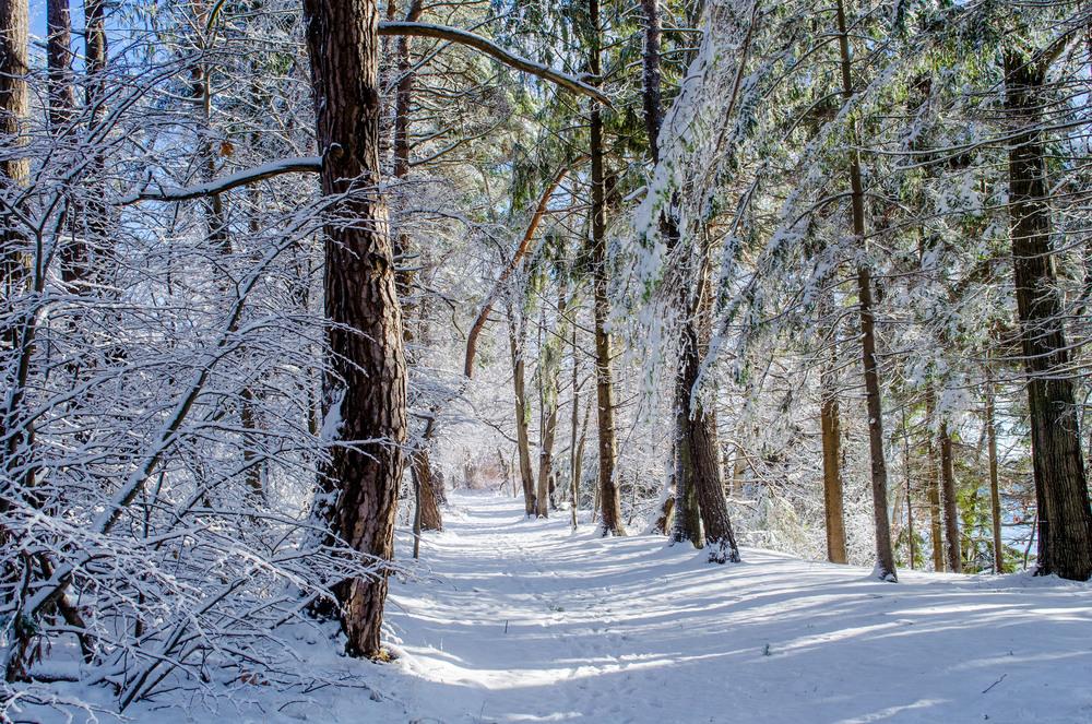 Winter Wonder Land_DSC0041.jpg