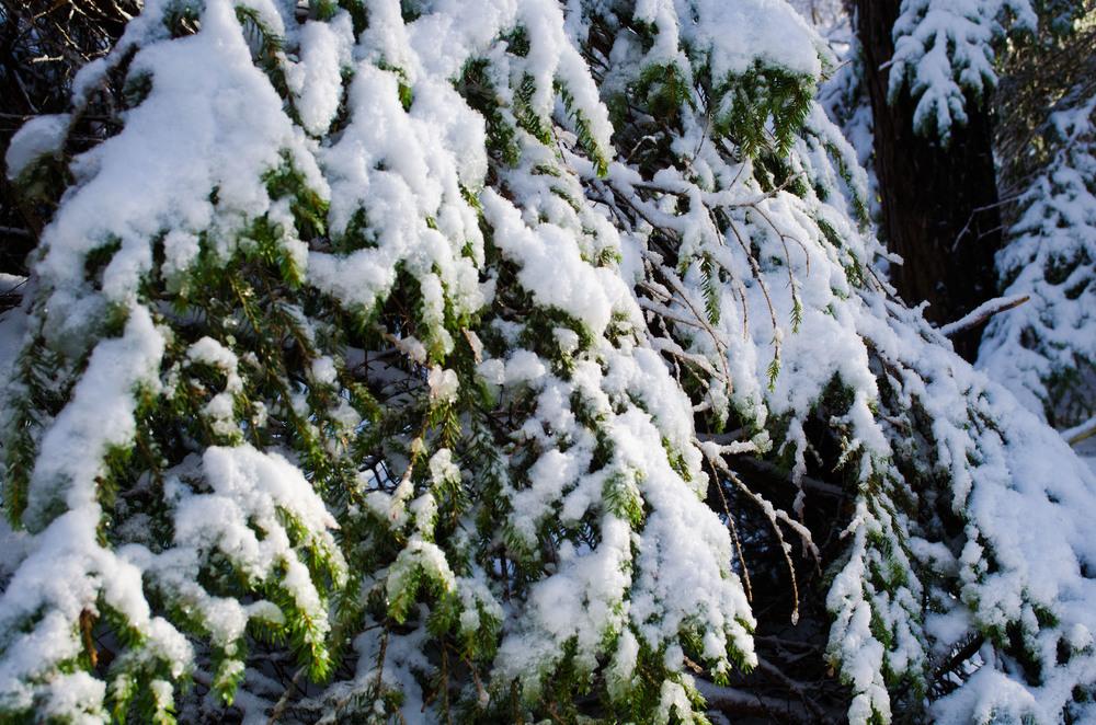 Winter Wonder Land_DSC0036.jpg