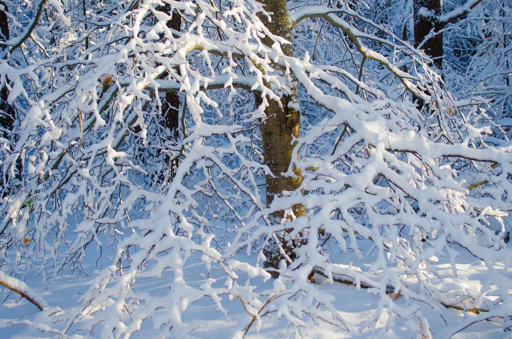 Winter Wonder Land_DSC0032.jpg