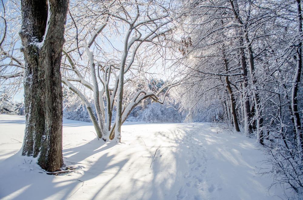 Winter Wonder Land_DSC0026.jpg