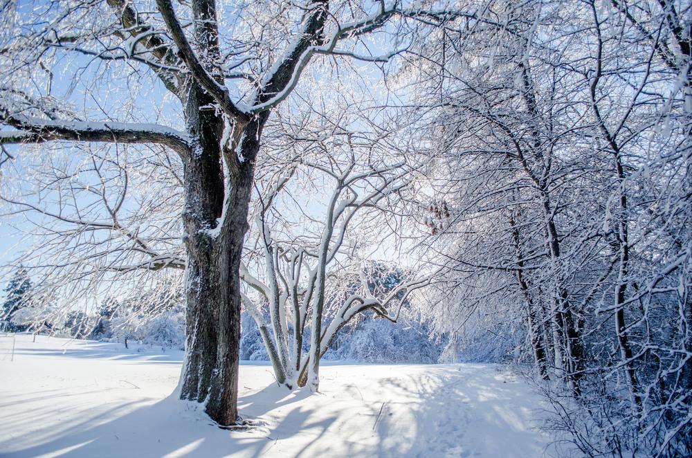 Winter Wonder Land_DSC0025.jpg