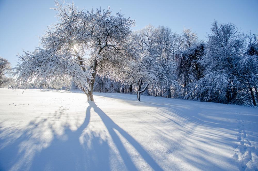 Winter Wonder Land_DSC0011.jpg