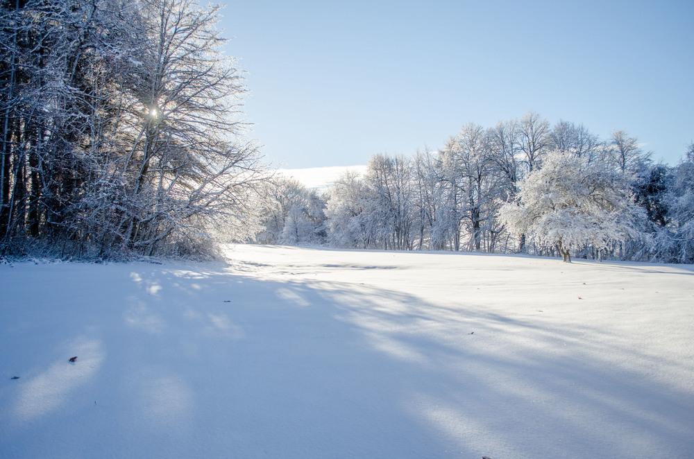 Winter Wonder Land_DSC0007.jpg