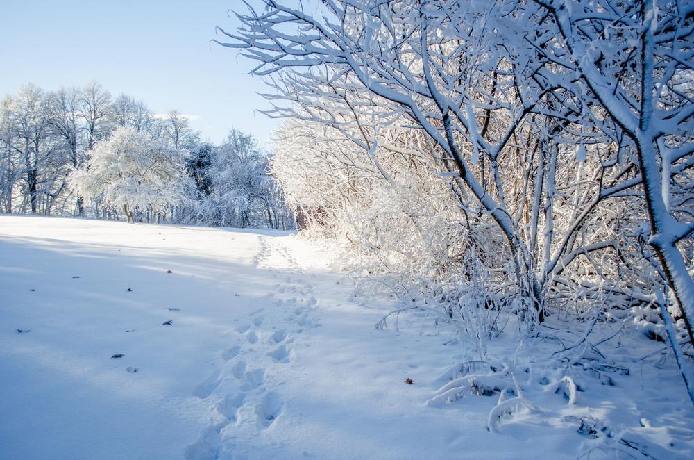 Winter Wonder Land_DSC0006.jpg