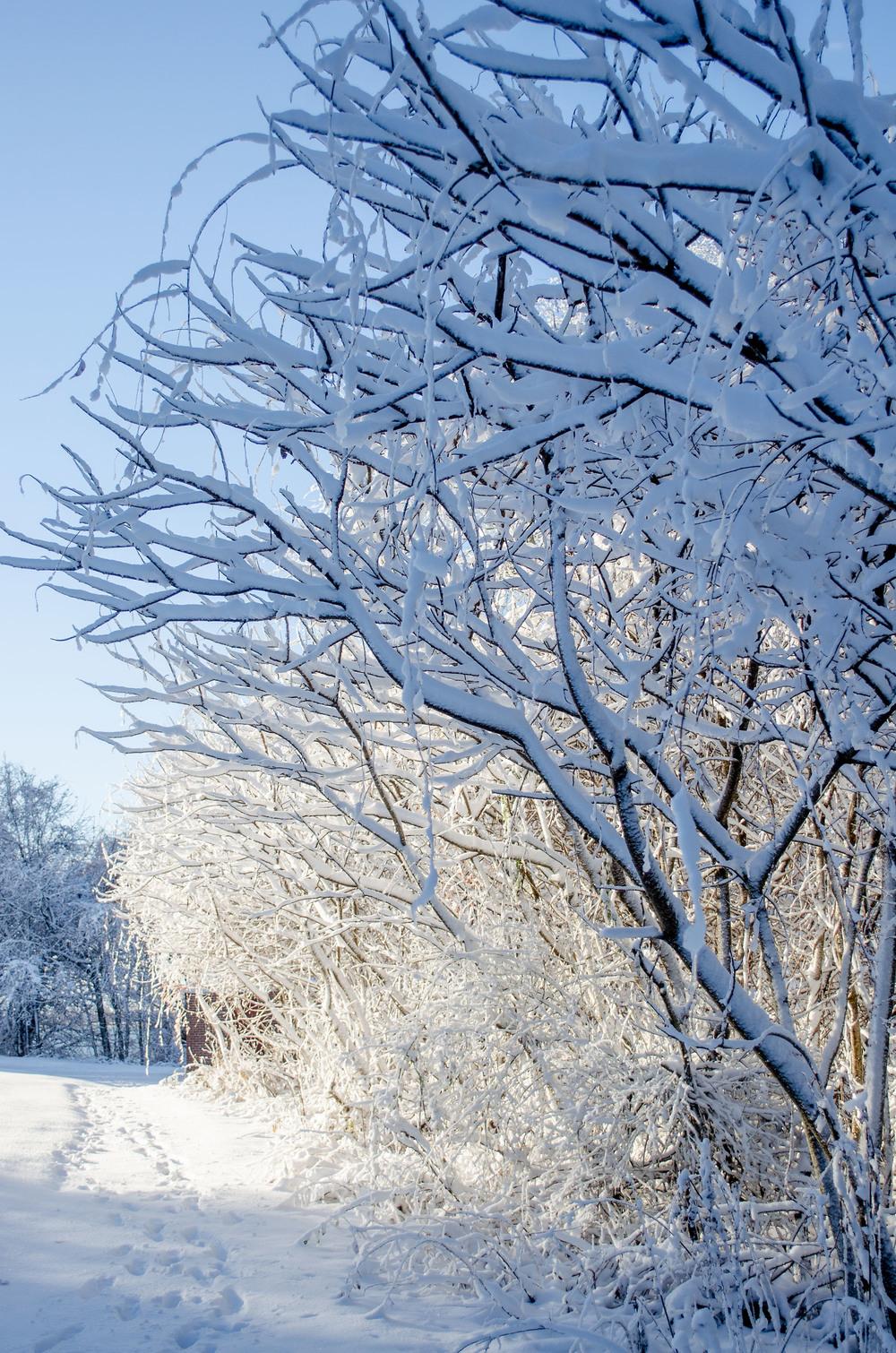 Winter Wonder Land_DSC0003.jpg