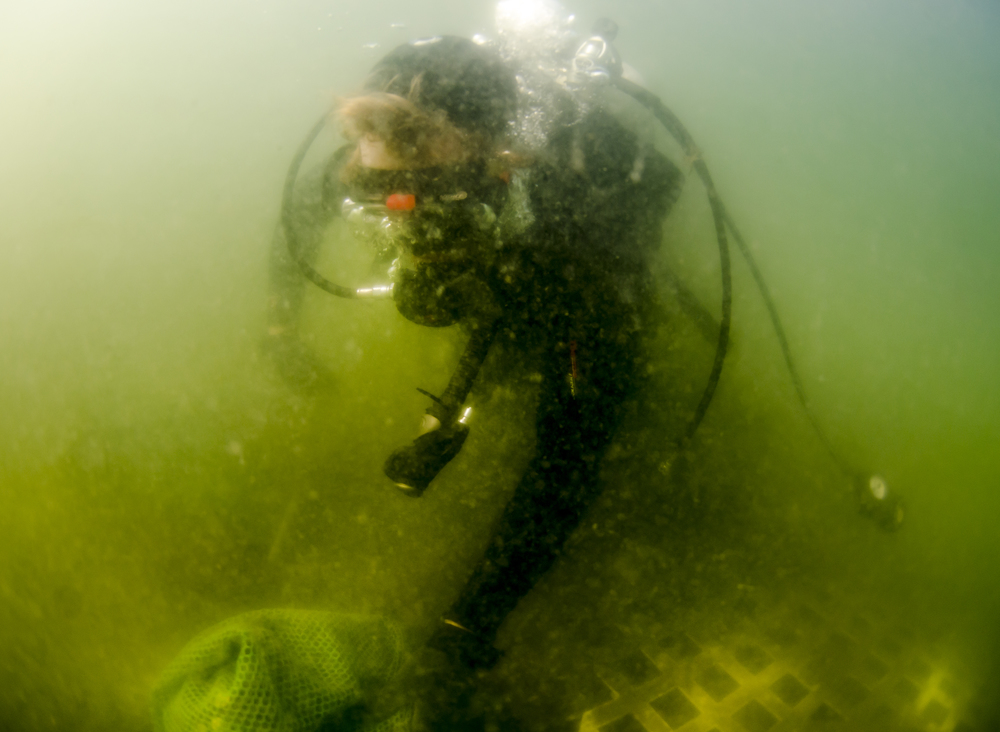A Two Docks diver, checking in on the clams...