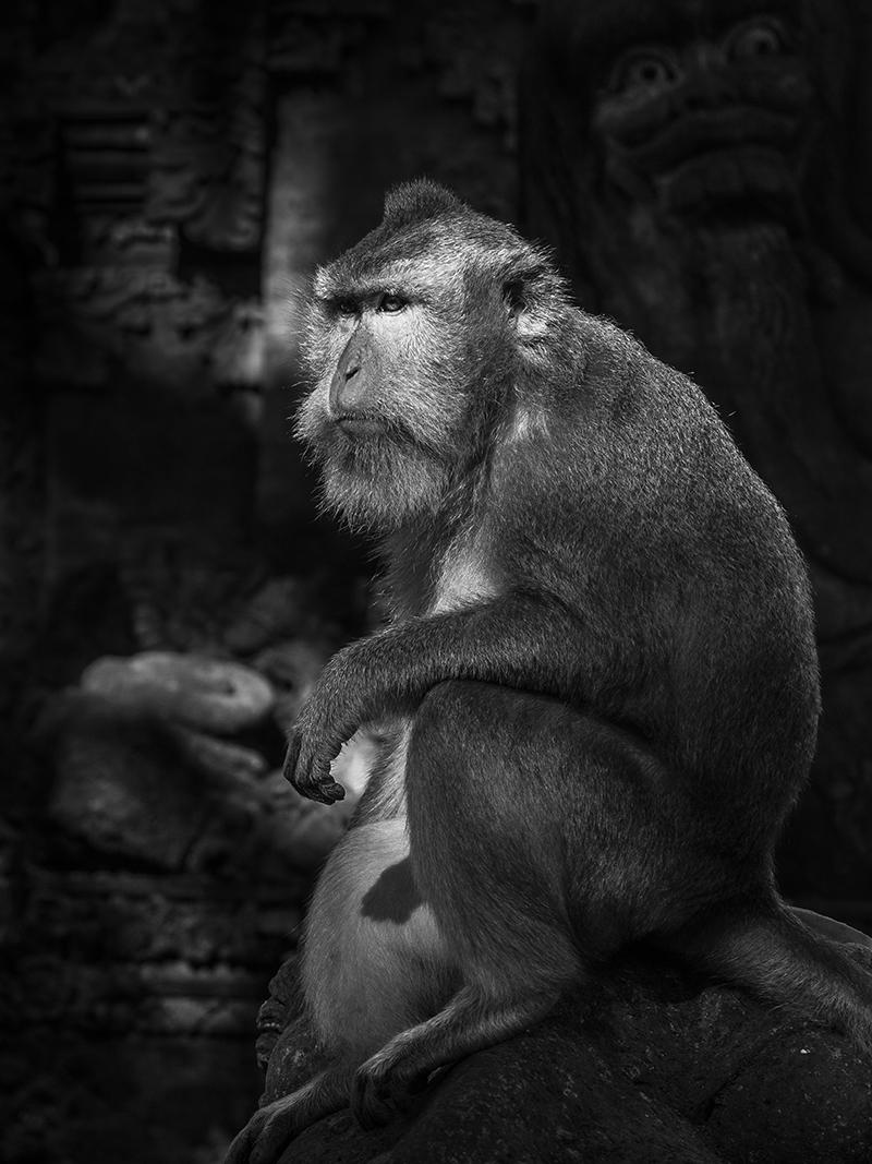 Monkey Forest Bali.jpg