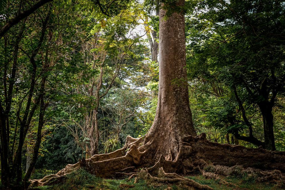 Salah satu pohon yang sangat menarik perhatian saya, mungkin karena cahaya yang pas sekali pada waktu itu.
