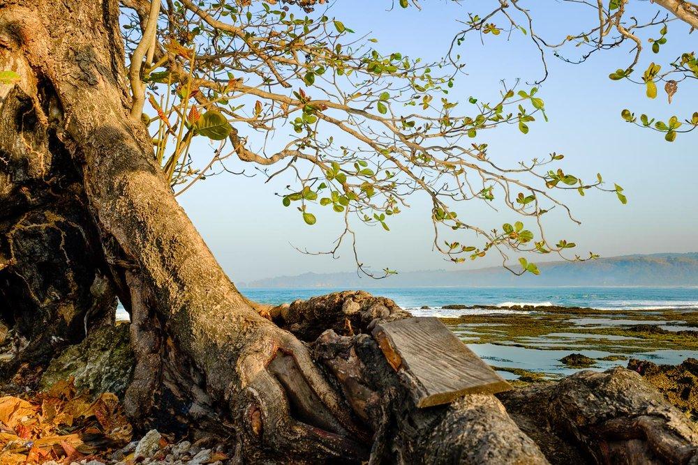 Entah kenapa saya suka sekali pohon ini. Tadinya saya cuma duduk-duduk ngadem di belakang pohon ini, cuma lama-lama dilihat kok pohon ini bagus juga. Fujifilm X-T2 | XF 23 f/1.4 | Godox Flash & Transmitter