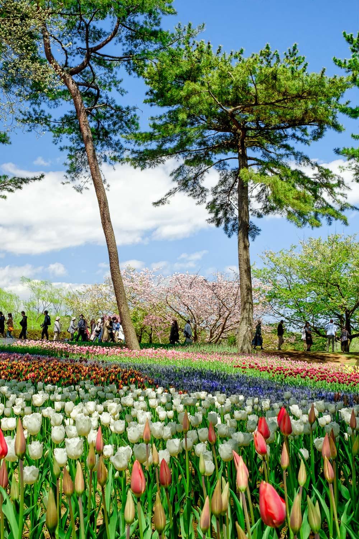 Framing menggunakan pohon dan foreground bunga.  Fujifilm X-T2 | XF 23 / 1.4