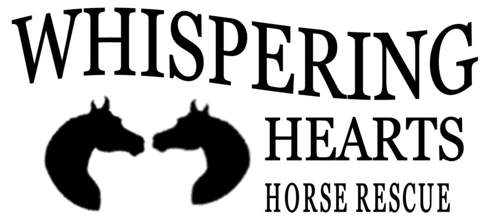 Day 2 On the second day of giving, my law firm gave to me, hope for the horses. (click for info)