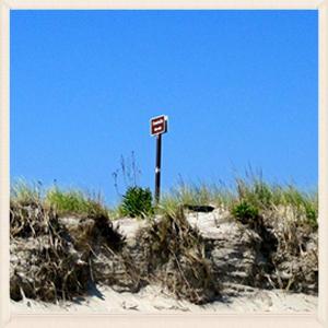 Ft. Tilden dunes pre-Sandy.