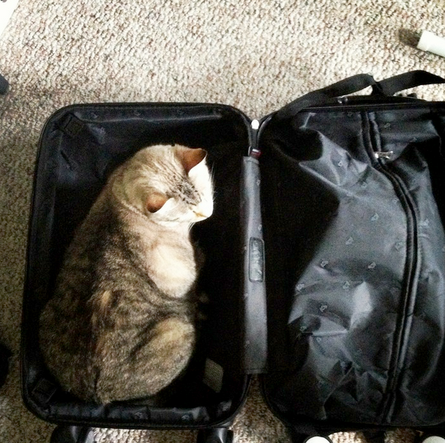 I can fits, I can sits.